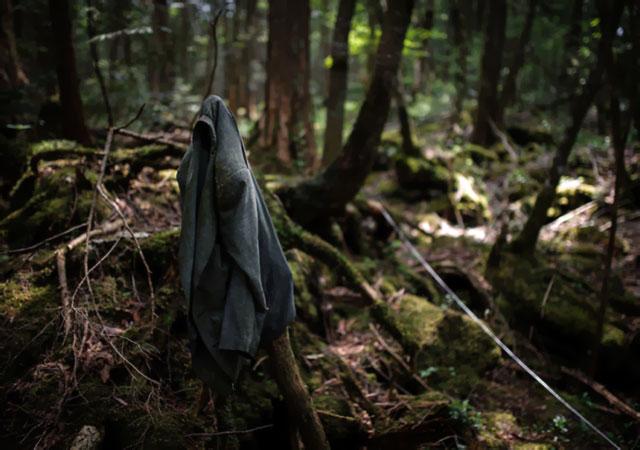 Aokigahara, a Floresta dos Suicídios