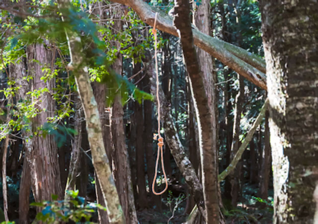 Suicide Forest, Aokigahara