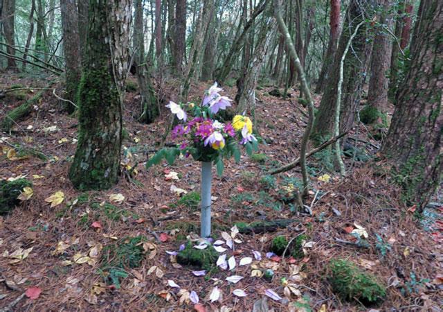Aokigahara, la Foresta del Suicidio