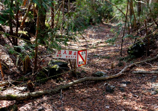 Aokigahara, la forêt des suicides